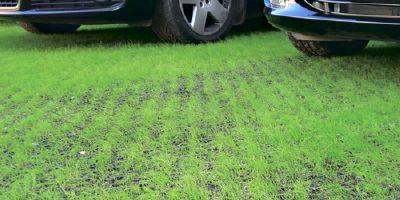 Раскошный газон с решетками РГ-60.40.5,1